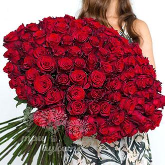 101 красная роза (Premium) 80 см.